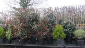 Downside's refurbished shrub growing area