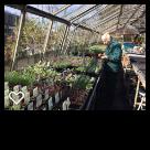 Lorraine sowing seeds at Downside Nurseries