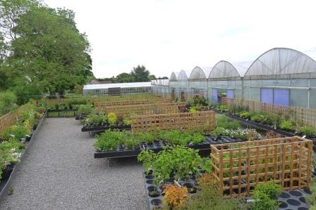 Great selection of shrubs from Downside Nursuries
