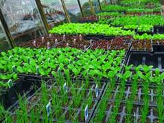 Fruit and Veg seedlings and Plants
