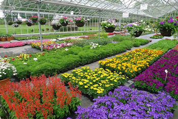 Summer Winter and Autumn Bedding Plants from Downside