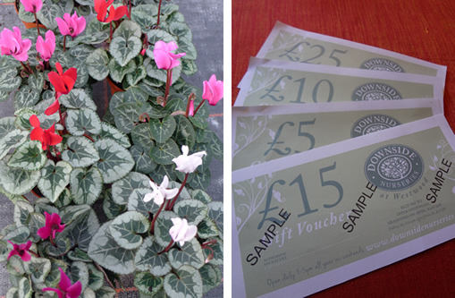 Pretty flowers and Gift Vouchers make an ideal Christmas gift. Buy from Downside Nursuries