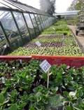 Veg plants small sizeP1010134