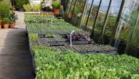 Vegetables at Downside April 2012
