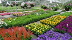 Pack Bedding at Downside Nurseries
