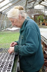 A day in the life of Lorraine Young - pricking out seeds at Downside Nurseries