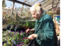 Lorraine Young pricking out seeds at Downside Nurseries